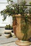 Installaties in de tuin in glanspotten stock afbeelding