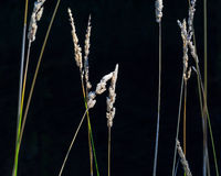 Installaties in de wildernis Stock Fotografie