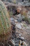 Installaties in de woestijn Stock Afbeeldingen
