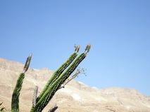 Installaties in de woestijn Royalty-vrije Stock Foto's