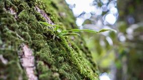 Installaties die in bomen leven Royalty-vrije Stock Fotografie