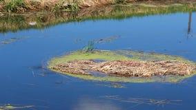 Installaties die in het water drijven stock footage