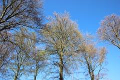 Installaties die Jonge Groene Bladeren in de Lente ontluiken stock foto