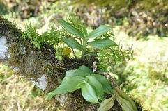 Installaties die op een boomboomstam groeien Stock Afbeeldingen