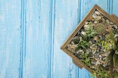 Installaties in een houten doos op een blauwe achtergrond Stock Fotografie
