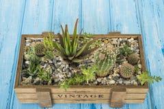 Installaties in een houten doos op een blauwe achtergrond Royalty-vrije Stock Fotografie