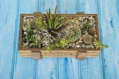 Installaties in een houten doos op een blauwe achtergrond Royalty-vrije Stock Afbeelding
