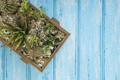 Installaties in een houten doos op een blauwe achtergrond Royalty-vrije Stock Foto's
