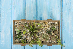Installaties in een houten doos op een blauwe achtergrond Stock Foto