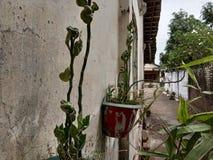 Installaties in een pot die aan de kant van het huis hangen stock foto's