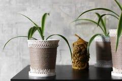 Installaties in een vaas houseplants royalty-vrije stock afbeeldingen