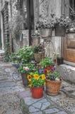 Installaties en bloemen Stock Foto's