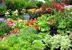 Installaties en bloemen Stock Fotografie