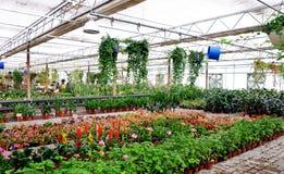 Installaties en bloemen in een serre Royalty-vrije Stock Fotografie