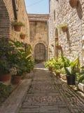 Installaties en bloemen in potten op smalle straten van het oude dorp van Spello, Umbrië, Italië Royalty-vrije Stock Foto