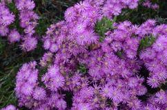 Installaties en bloemen van Costa Vicentina Natural Park, Zuidwestelijk Portugal Stock Foto