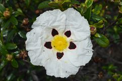 Installaties en bloemen van Costa Vicentina Natural Park, Zuidwestelijk Portugal Royalty-vrije Stock Afbeeldingen