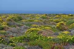 Installaties en bloemen van Costa Vicentina Natural Park, Zuidwestelijk Portugal Stock Foto's
