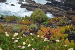 Installaties en bloemen van Costa Vicentina Natural Park, Zuidwestelijk Portugal Stock Fotografie