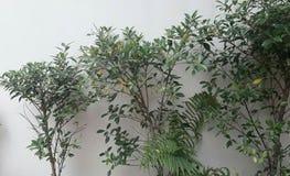 Installaties en bomen Royalty-vrije Stock Foto's