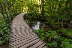 Installaties en bomen, een mooie mening van Plitvice-park Royalty-vrije Stock Foto's