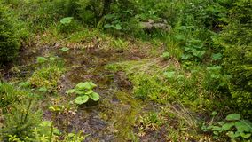 Installaties en mos in waterstroom stock afbeeldingen
