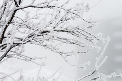 Installaties en sneeuw Royalty-vrije Stock Afbeelding