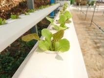 Installaties Hydroponic Organische groenten royalty-vrije stock fotografie