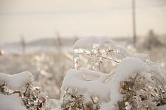 Installaties in ijs worden behandeld dat Royalty-vrije Stock Foto