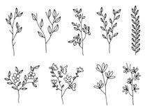 Installaties met bladerenbloemen en bessen twijgen geïsoleerde reeks vector illustratie