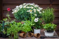 Installaties met bloemen en kruiden in tuin stock fotografie
