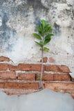 Installaties op de oude bakstenen Stock Foto