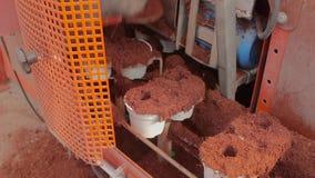 Installaties in potten op de transportband, bewegende installaties in potten op de bestrating Moderne installatie het groeien ins stock footage