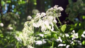 Installaties van de bloemen de boszon stock video