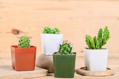 Installaties van de stilleven de Natuurlijke Drie Cactus stock fotografie