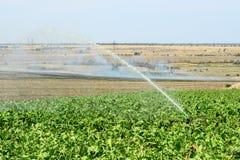 Installation av bevattningsystemet i fältet, vattenspridare i funktion av att bevattna av jordbruks- växter arkivfoto