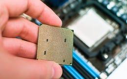 Installation av CPUen in i moderkortet Arkivfoto