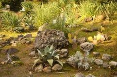 Installation av stenarna och växterna Arkivfoton