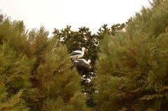 Installation av storkar i krökningen Royaltyfria Foton