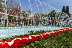 Installation of carnations on a flower festival in Baku Stock Images