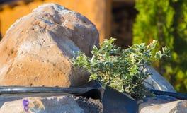Installation d'irrigation par égouttement dans le jardin du style japonais Photographie stock