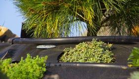 Installation der Berieselung im Garten der japanischen Art Stockfotos