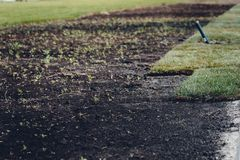 Installation or laying of a green lawn royalty free stock photo