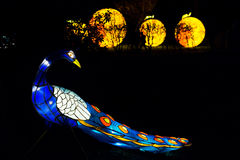 Installation of peacock lantern in Chiswick House And Gardens Stock Images