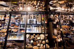 Installation with specimens of extinct animals and modern inMuseum fur Naturkunde. BERLIN, GERMANY - AUG 30: Installation with specimens of extinct animals and Stock Image