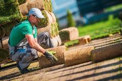 Installatore caucasico dell'erba del tappeto erboso immagine stock libera da diritti