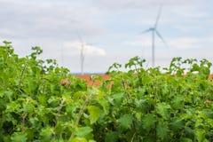 Installazioni di energia eolica nell'agricoltura il paese Immagine Stock