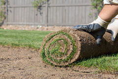 Installing new lawn Stock Photography