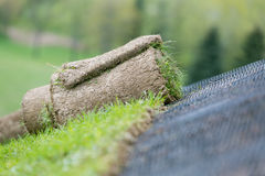 Installing rolled green grass with erosion control mesh on a slope Stock Image