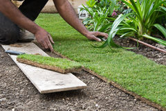 Installing rolls of grass Royalty Free Stock Photos